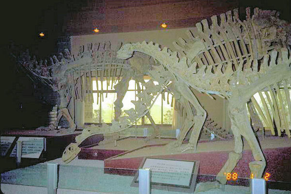 Zigong China  city photo : to city of zigong sichuan 21 dinosaur at the dinosaur museum zigong ...