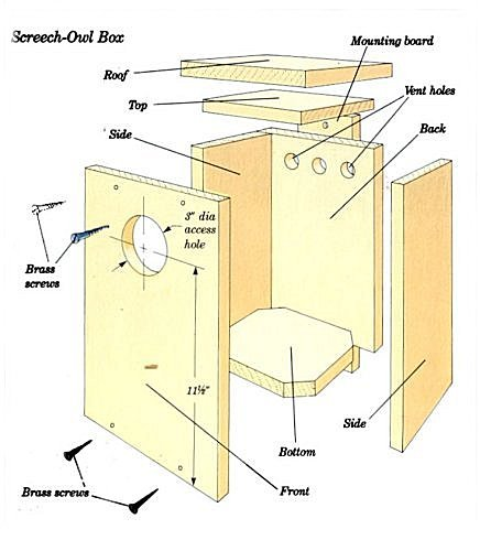 Screech Owl Box Plans
