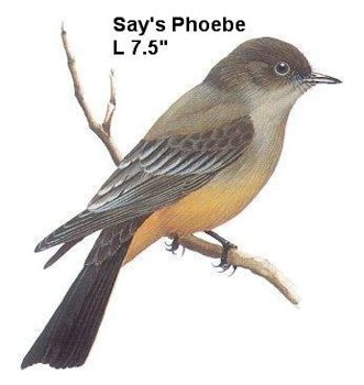 I-bird-pic1.jpg