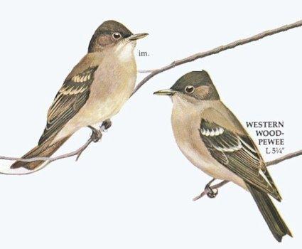 The Lahontan Audubon Society  HOME