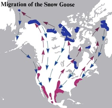 Migration Routes of the Snow Geese