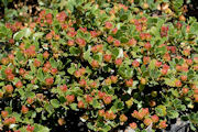 Buy Wildflower and Sedum Mats for Green Roof Construction