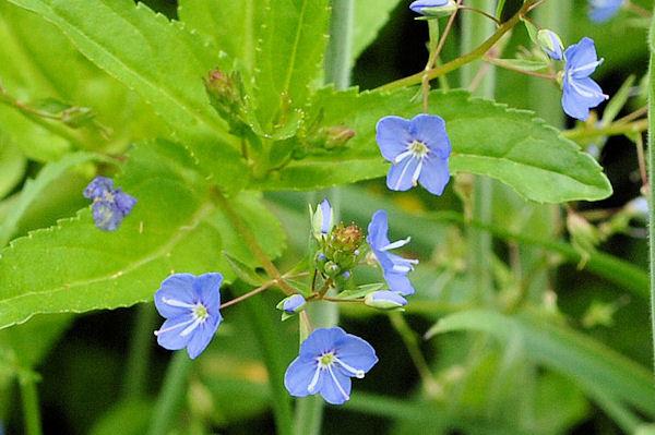 Wildflowers ~ Wild Flower Stock Photography. Wildflower Plant